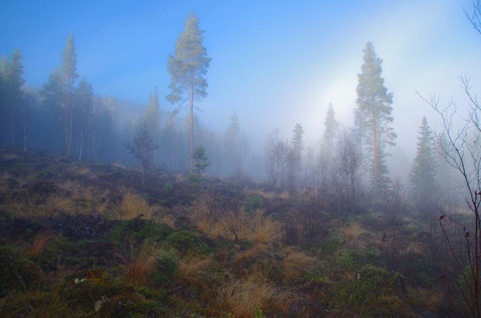autumforest-tynset